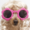 Head of a dog wearing pink sunglasses