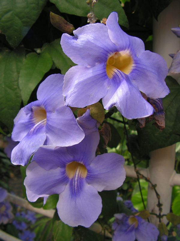 Purple flowers illustrating book by Richard Klass about confidential information and keeping client confidences and loyalties after the attorney-client relationship has terminated
